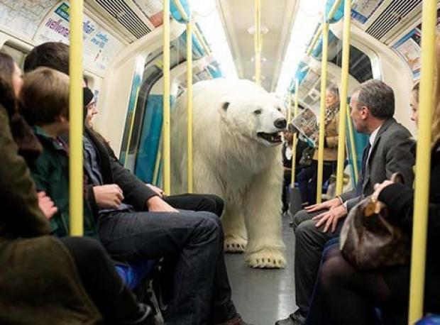 Kutup Ayısı Metroya İndi