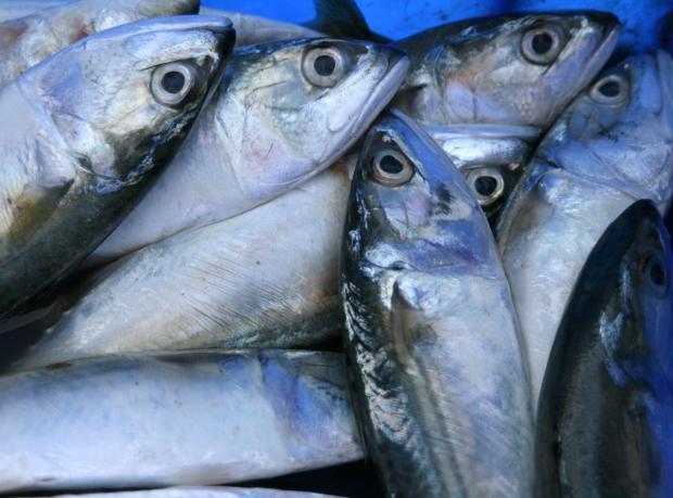 Yediği Canlı Balık Öldürüyordu