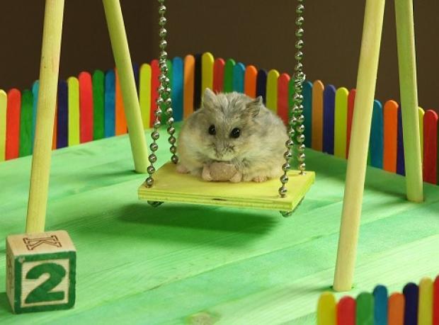 Yaramaz Hamster'ın Mini Oyun Parkı