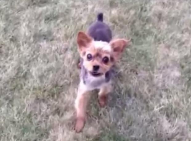 Süper Rapçi Köpek