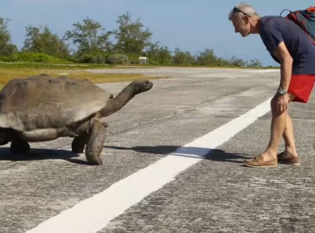 Çiftleşen Kaplumbağaları Rahatsız Edince...