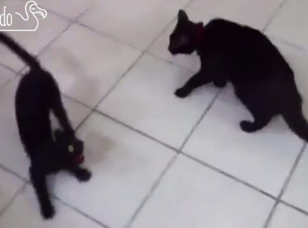 Kediler Sahte Kedilere Karşı