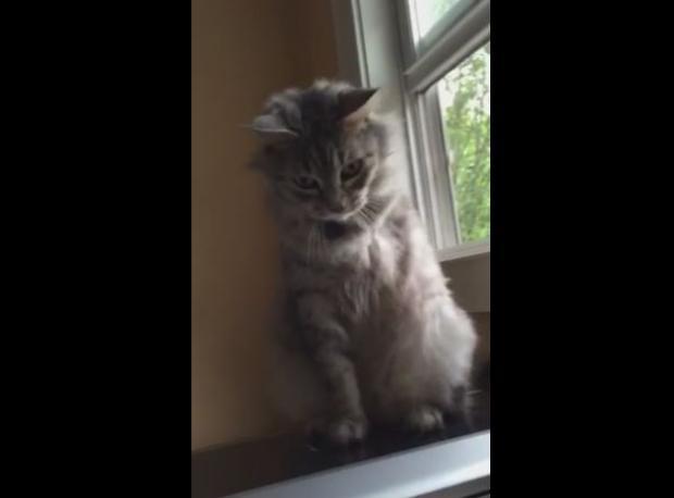 3 Ayaklı Kedinin Hüzünlü Videosu