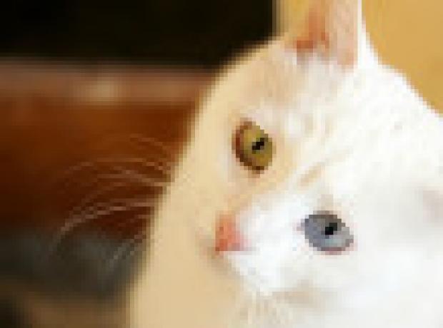 Suriyeli sığınmacı kedisi ile İsveç'te buluşacak