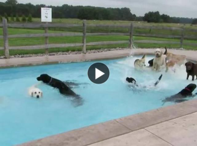 Köpeklerin Havuz Partisi