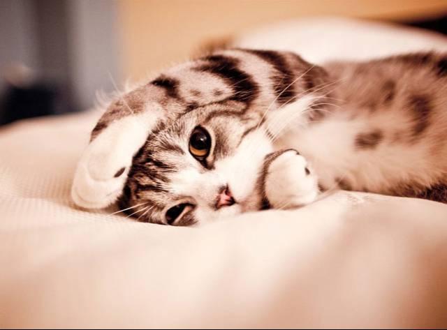 Kediler Alemi Bildiğiniz Gibi Değil!