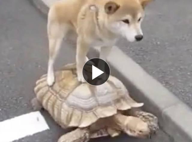 Köpek ve Kaplumbağa