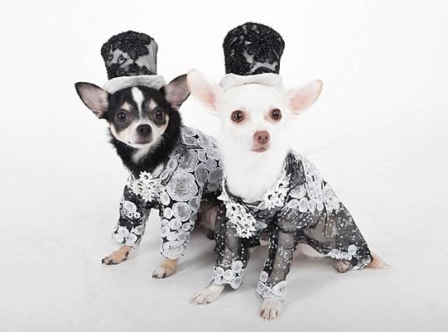 Bu Köpekler Çok Şık