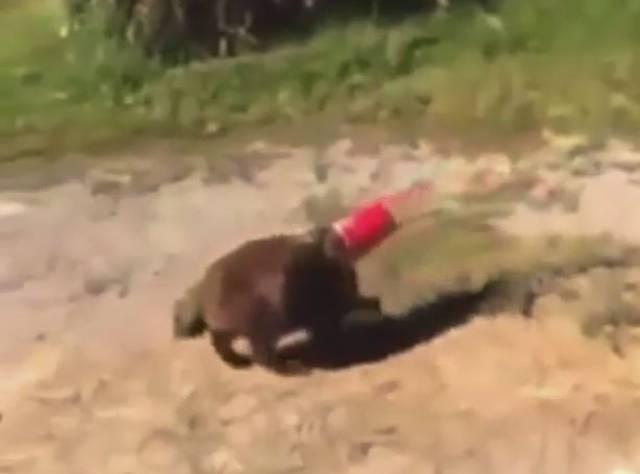 Kedinin Zor Anları