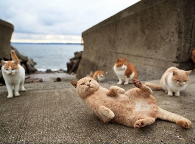 Kedi Adasına Hoş Geldiniz!