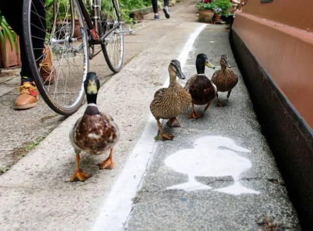 Ördeklere Özel Yol