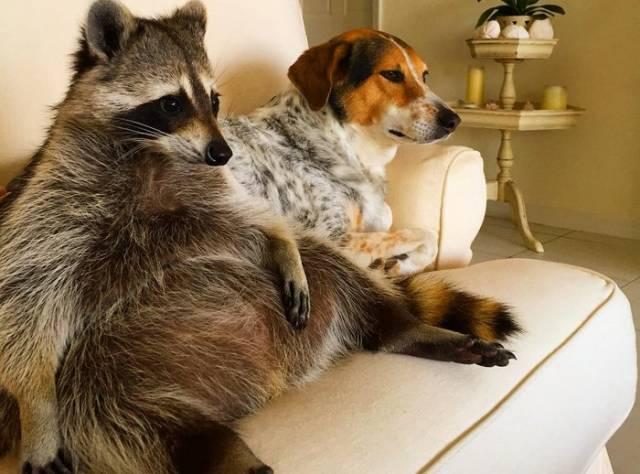 Evdeki Köpekleri Annesi Sanıyor