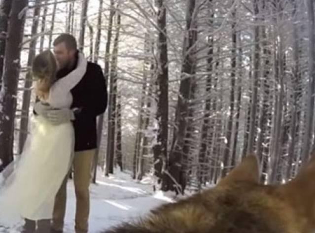 Düğün Videolarını Köpekleri Çekti!