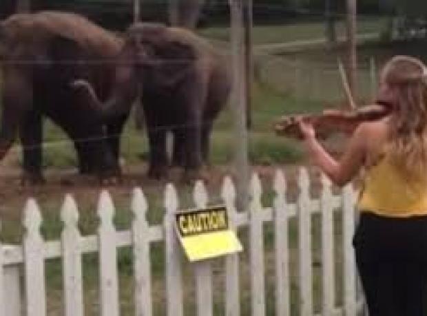 Filler Ne Tür Müzikten Keyif Alır?