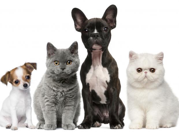 Evcil Hayvan Sahipleri Daha Stresli