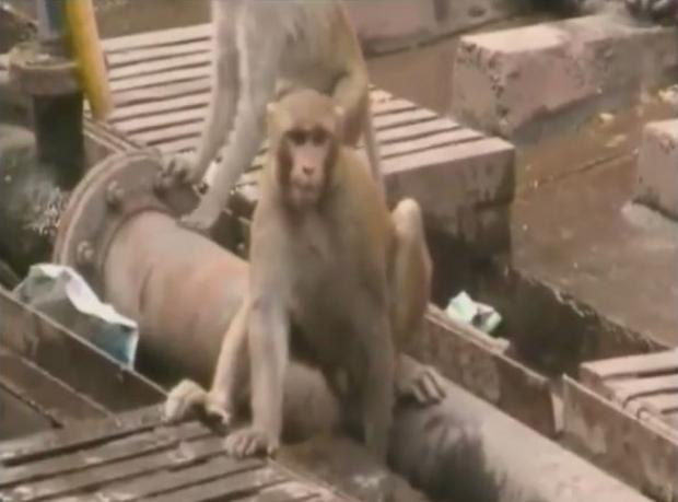 Maymunluk Ölmemiş