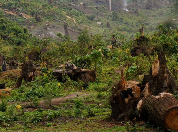 Liberya'yla 'Ormanları koru, para verelim' anlaşması