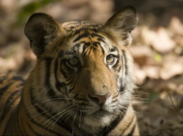 WWF: Vahşi yaşam yok oluyor