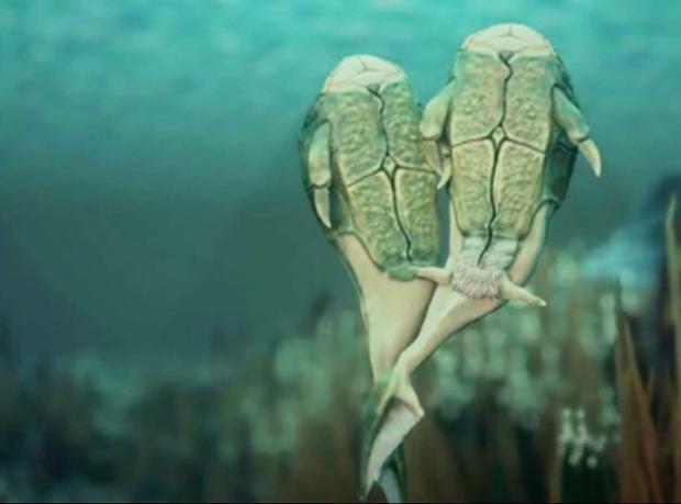 385 milyon yıl önceki 'ilk cinsel ilişki'