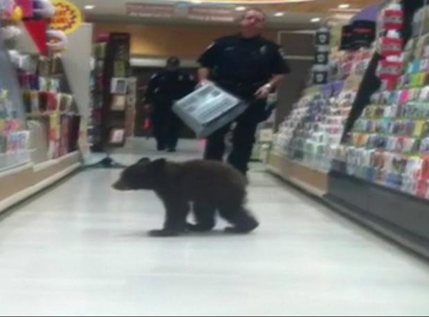 Yolunu şaşıran yavru ayı markette yakalandı