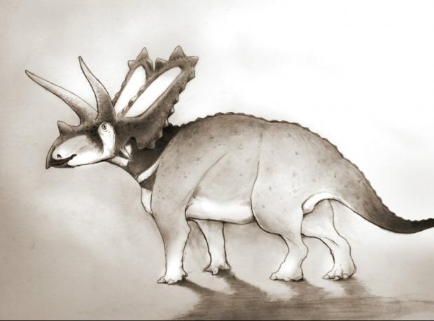Yeni bir boynuzlu dinozor türü keşfedildi