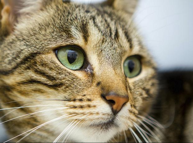 İsviçre'de 'Kedi köpek yemek yasaklansın' çağrısı