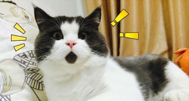 Şaşkın Kedi Banye