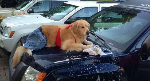 İnsan Köpek Bailey
