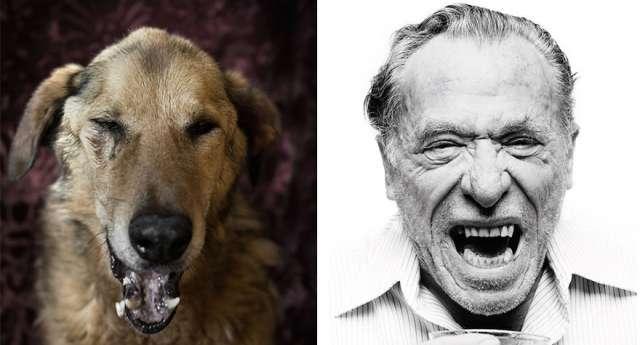 Sokak Köpekleri vs. Ünlü Yazarlar