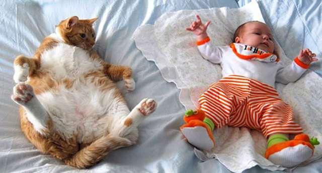 Her Çocuğun Bir Kedisi Olmalı