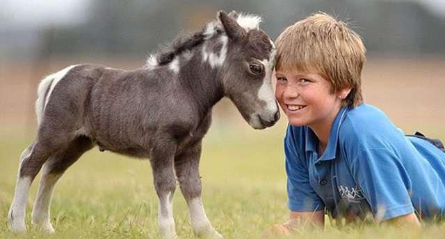 Her Eve Lazım Atlar!