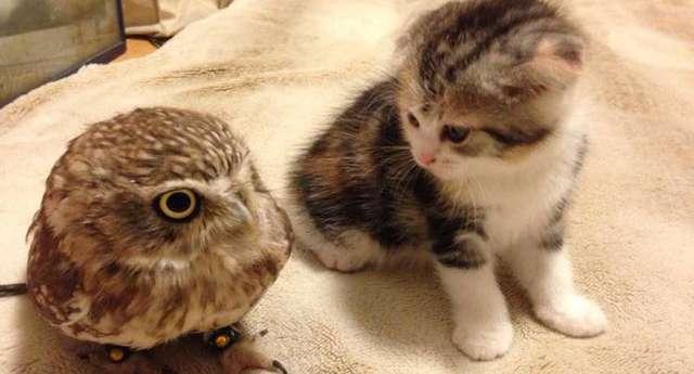 En Sevimli ve Minik Dostluk