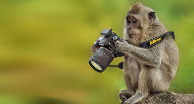 Bırakılsa Fotoğrafçı Olacak Hayvanlar