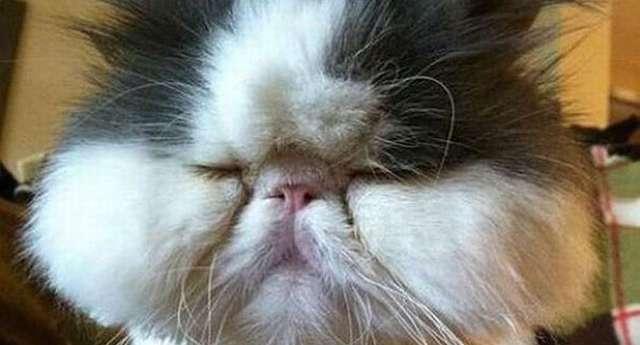 Gazi Kediler
